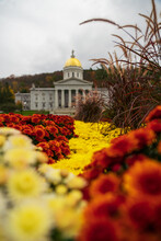 Color Flowers In The Season Of Fall In Vermont
