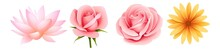 Beautiful Spring Flower. Flowers Icons Set. Rose, Flower, Pink, Roses, Bouquet, Love, Beauty, Nature.