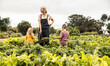 canvas print picture - Young mother standing in a vegetable garden with her children