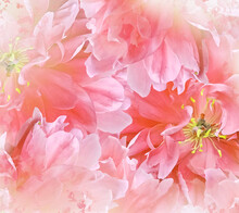 Watercolor Red  Tulips Flowers. Floral  Background. Closeup.  Nature.