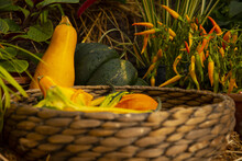 Bright Pumpkins And Other Vegetables In A Wicker Basket .