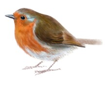 European Robin, Bird, Watercolor Drawing, Digital Illustration, Animal.