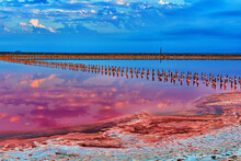 Pink Lake In Crimea, With A Dried Crust Of Salt And Minerals On The Shore