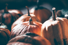 Different Varieties Of Squashes And Pumpkins