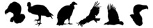 Condor Icons Vector Symbol Icon. Condor Silhouettes, Silhouette Illustrations Of South American Condors In Flight.