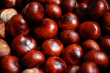 Ripe Chestnuts On An Old Iron Pan.