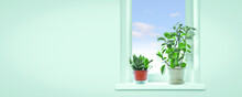 Snake Plant (Sansevieria Trifasciata) And Pepper Face (Peperomia Obtusifolia) On The Windowsill Of The House. Houseplant For Phytodesign And Landscaping. Copy Space.