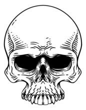 Skull Old Vintage Woodcut Etching Engraving Style