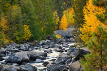 Trees In Fall Colors Line Icicle Creek In The Washington Cascades As The Water Passes Large Boulders In The Creek Bed
