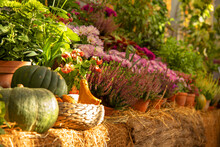 A Variety Of Autumn Flowers In Ceramic Pots And Vegetables In Baskets Stand On A Shelf Covered With Burlap And Straw.