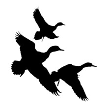 Vector Illustration Of Birds. Black Silhouette Of A Duck On A White Background.