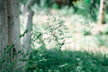 Beautiful Nature View Of Green Leaf On Blurred Greenery Background In Garden And Sunlight With Copy Space Using As Background Natural Green Plants Landscape, Ecology, Fresh Wallpaper Concept
