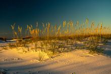 Sand Dune And Sea Oats