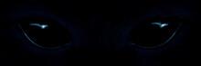 Shaggy Monster Black Eyes Closeup