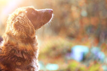 Stray Dog On The Street, Chipping, Sterilization Animal Shelter, Portrait Of Mongrel Dog