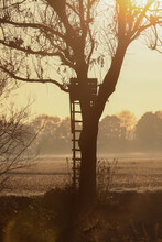 Silhouette Of A Hunting Pulpit - Hunters Stand On A Tree In Bright Morning Light In Autum, Overlooking An Empty Field Over To Some Bushes On The Horizon.