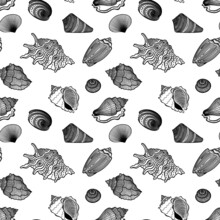 Vector Seamless Pattern Of Detailed, Realistic, Various Outline Sea Shells, In Black Color, On White Background