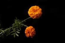 Día De Muertos 2021, Flores De México. Tradicional. Day Of The Dead
