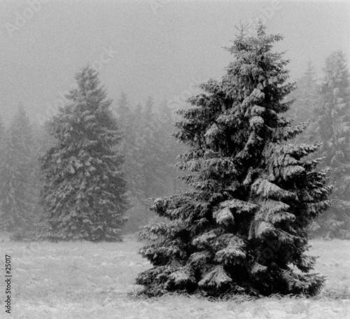 Fotografia sapin dans la neige