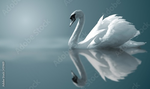 Fotografie, Obraz swan reflections