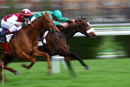 chevaux de course Fototapet