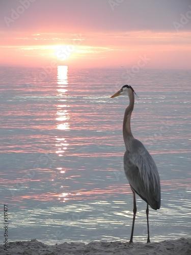 Slika na platnu florida heron