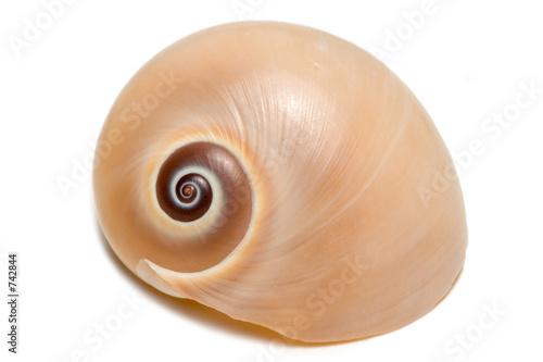 Stampa su Tela small seashell ii