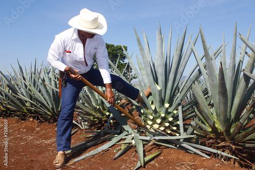 Obraz na płótnie tequila