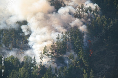 Canvas Print mountainside forest fire