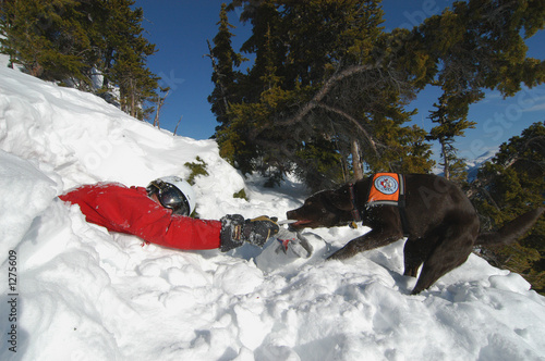 Leinwand Poster avalanche rescue dog pulling victim out