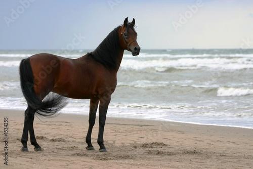 beauty on the beach #1534255