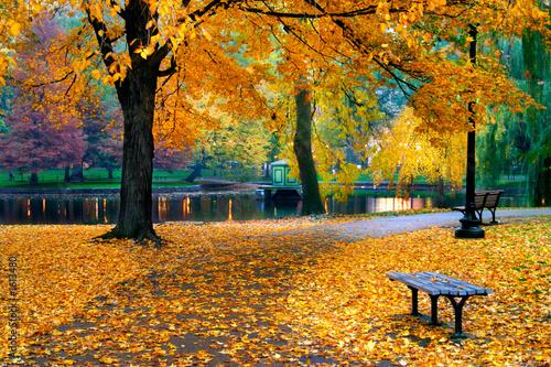 Fotomural autumn in boston public garden