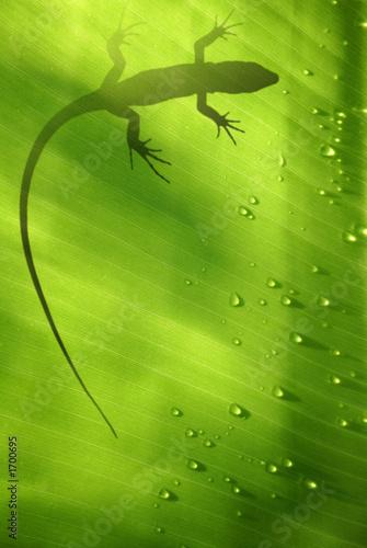 lagarto tropical #1700695