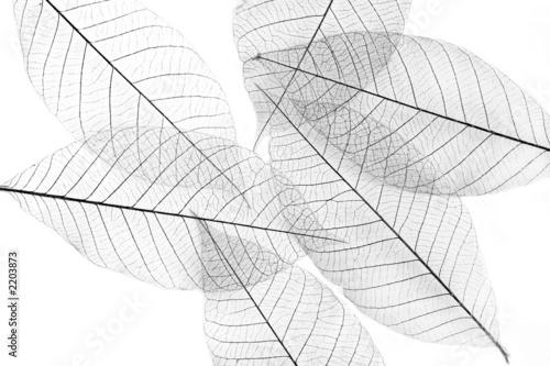 leaves #2203873