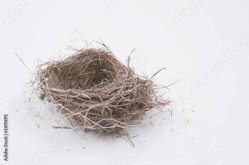 Cuadros en Lienzo birds nest