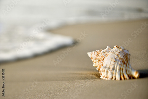 Leinwand Poster Conch shell on sand with waves.