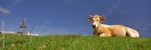 Canvas Print une vache au soleil