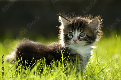 little kitten playing on the grass close up #3646070