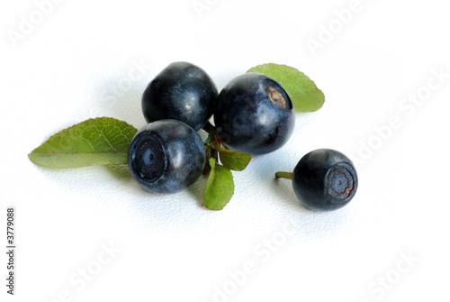 Fotografija bilberries macro