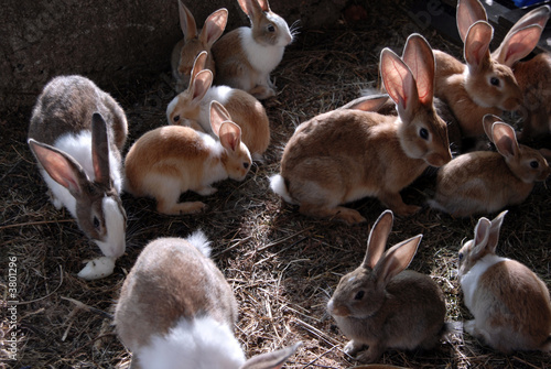 lots of big and small rabbits in the cage Fototapeta