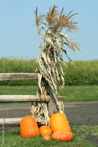 Pumkins and corn stalks Fototapeta