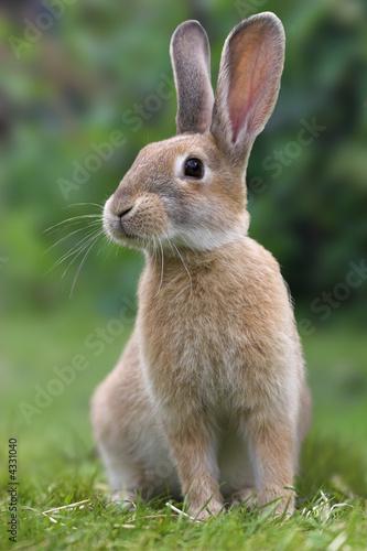 Foto Rabbit