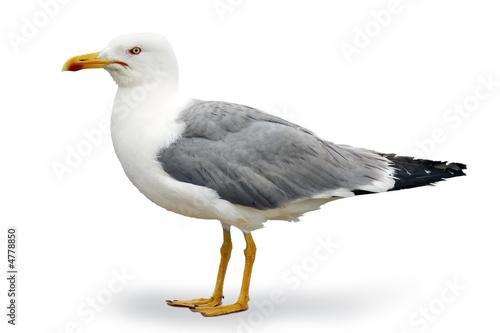 Wallpaper Mural Seagull