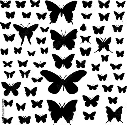 Butterfly silhouettes #4840445