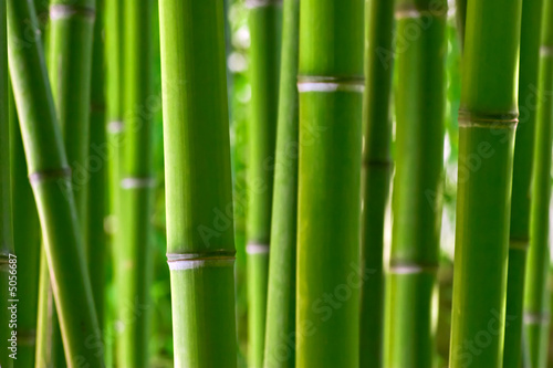 Bamboo forest #5056687