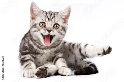 Fotografia Tabby kitten isolated