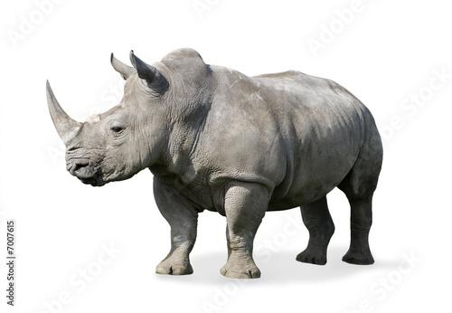Obraz na płótnie Nosorożec