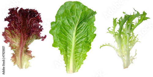 Canvas Print Red leaf lettuce, romaine and endive leaf