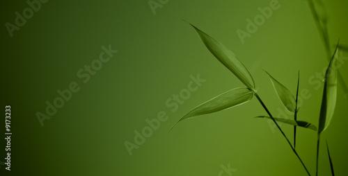 zen bamboo - green background #9173233