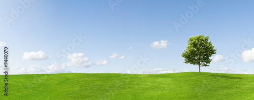 Fotografie, Obraz Panorama of a maple tree on a meadow against a blue sky